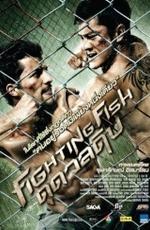 Бойцовая рыбка / Fighting Fish